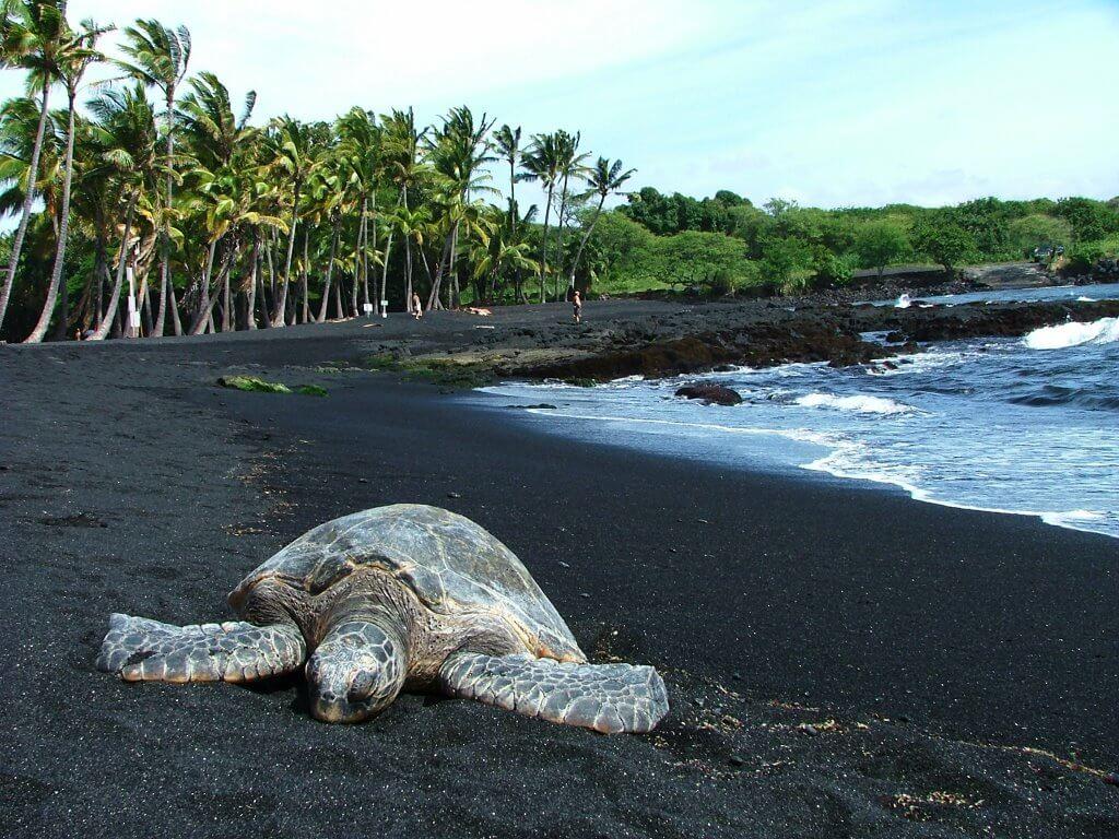 Punalu'u Black Sands Beach, Hawaii